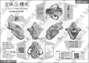 立体標本の見開き画像SAMPLE